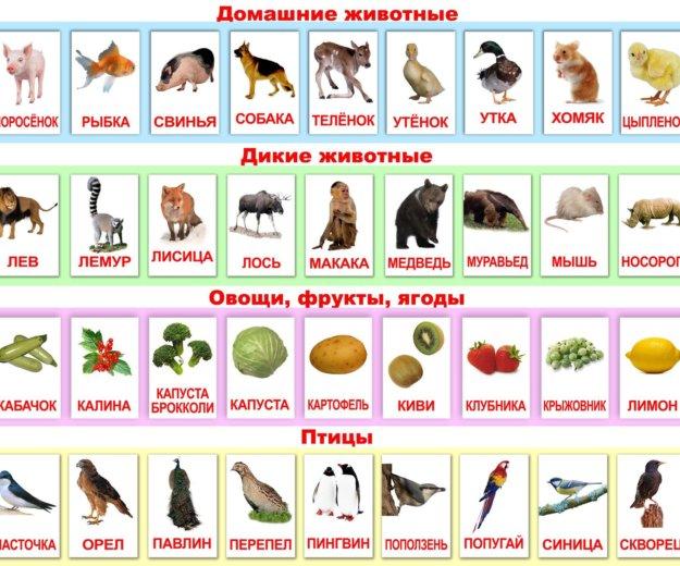 Раннее развитие. карточки по методике домана. Фото 1. Москва.