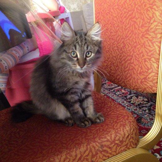 Котик. Фото 2. Ессентуки.