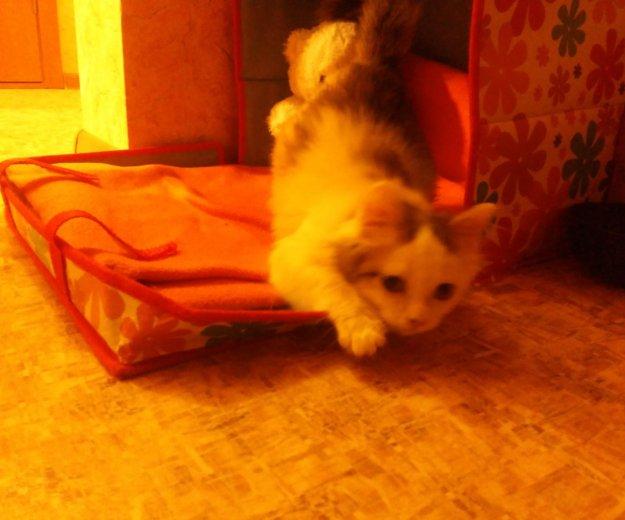 Кошечка, 2-3 месяца. Фото 2. Южно-Сахалинск.