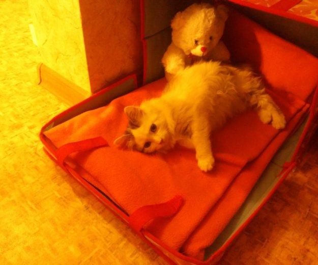 Кошечка, 2-3 месяца. Фото 3. Южно-Сахалинск.