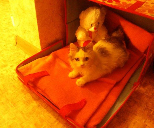 Кошечка, 2-3 месяца. Фото 4. Южно-Сахалинск.