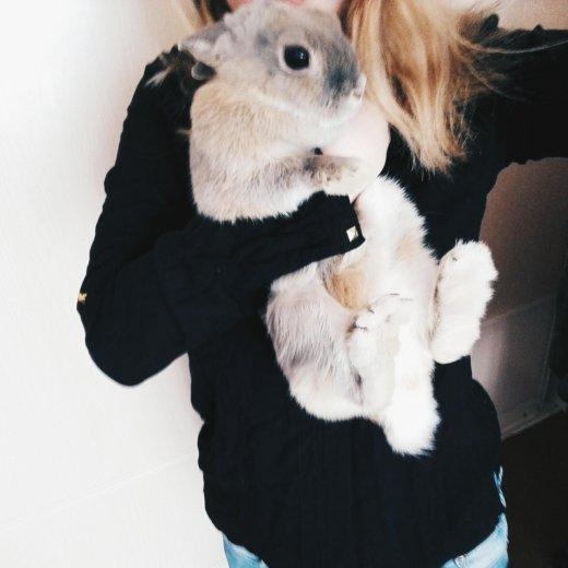 Кролик. Фото 1. Красноярск.