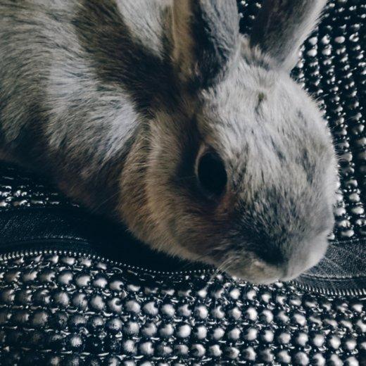 Кролик. Фото 3. Красноярск.