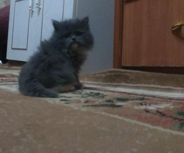 Сибирские котята(мальчики). Фото 1. Уфа.