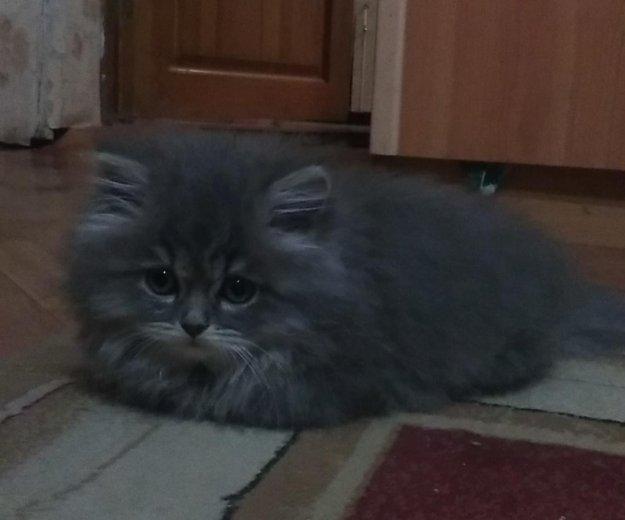 Сибирские котята(мальчики). Фото 3. Уфа.