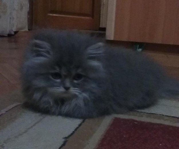 Сибирские котята(мальчики). Фото 4. Уфа.