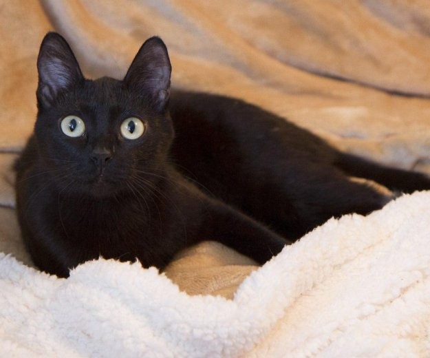 Черная красавица лоян. Фото 1. Тюмень.