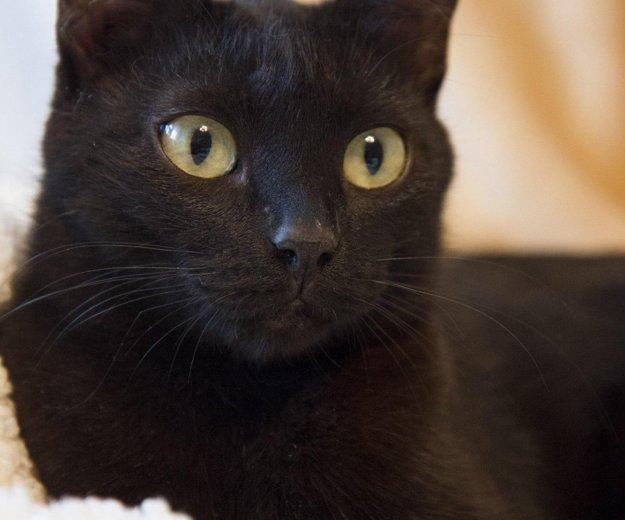 Черная красавица лоян. Фото 4. Тюмень.