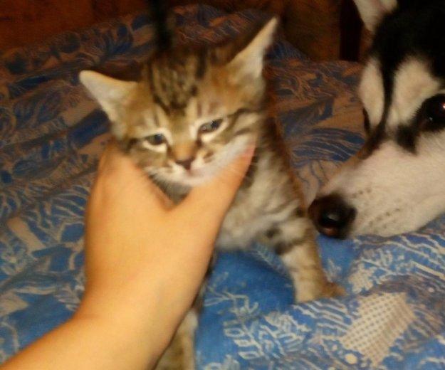 Котенок. Фото 2. Омск.