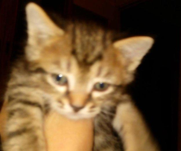 Котенок. Фото 3. Омск.