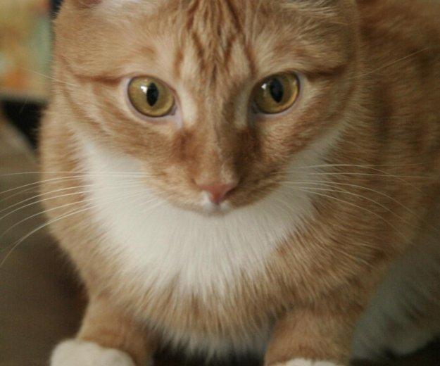 Кот рыжик. Фото 1. Томск.