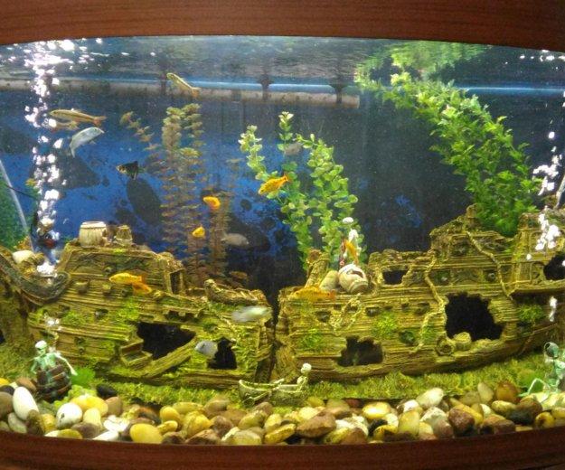 Обслуживание аквариума. Фото 2. Москва.