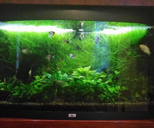 Обслуживание аквариума. Фото 3. Москва.