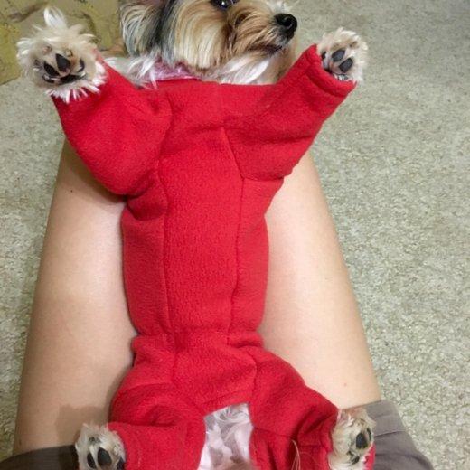 Пальто для собаки. Фото 4. Иркутск.
