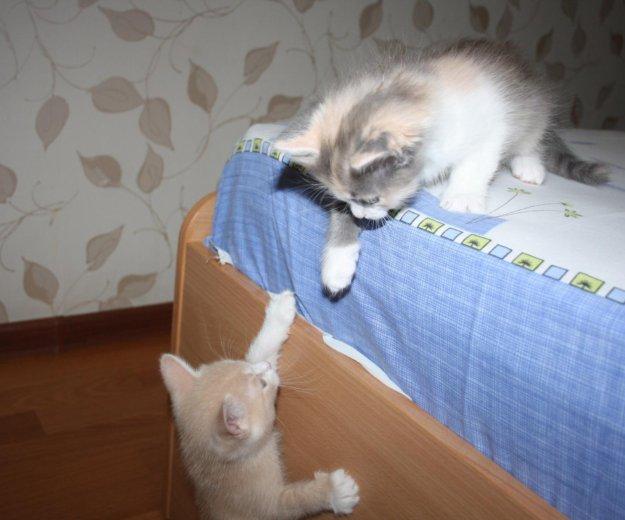 Отдадим в добрые руки!. Фото 1. Георгиевск.