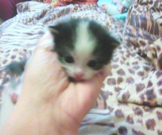 Котята в добрые руки. Фото 1. Сургут.