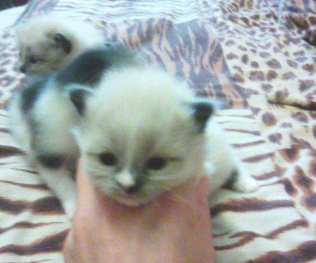 Котята в добрые руки. Фото 2. Сургут.