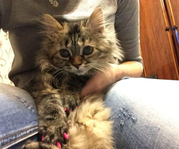Кошечка срочно!. Фото 1. Ижевск.