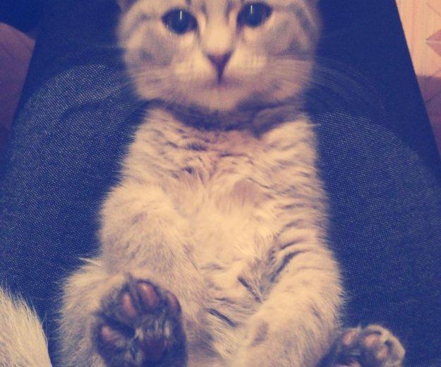 Котёнок. Фото 1. Астрахань.