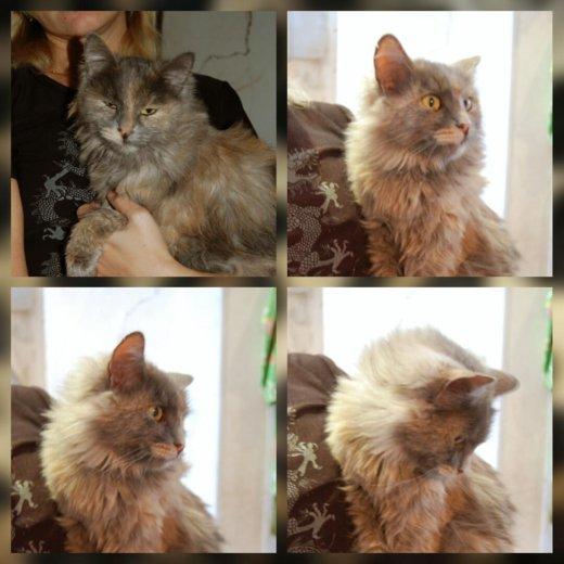 Кошка мелинда. Фото 1. Саратов.