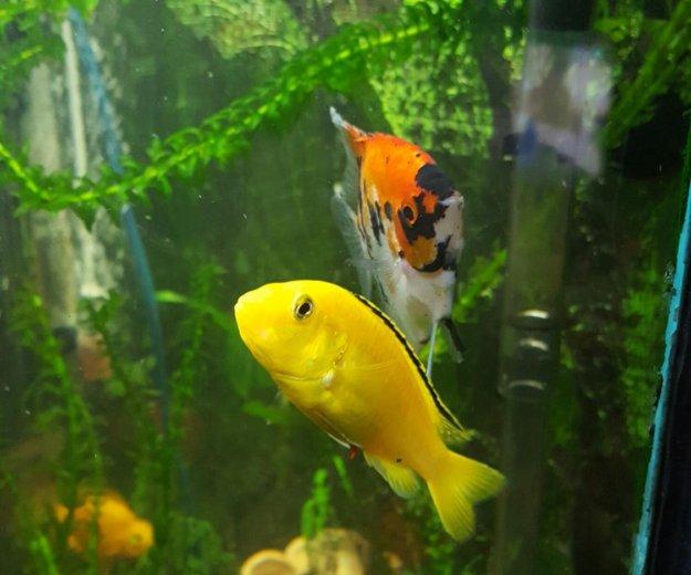 Рыбки. Фото 1. Москва.
