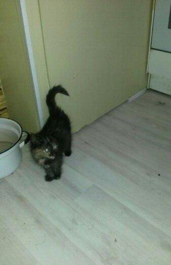 Котята. Фото 3. Зеленоград.