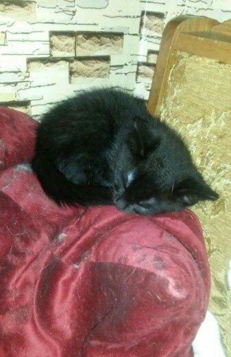 Котята. Фото 4. Зеленоград.