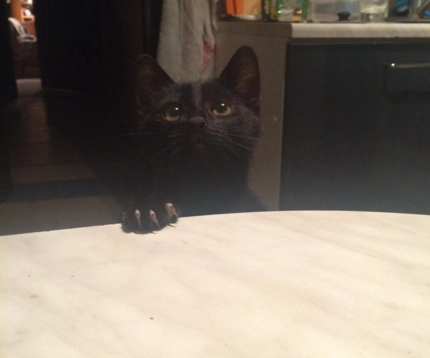 Маленький черный котенок ищет любящую семью.. Фото 1. Обнинск.