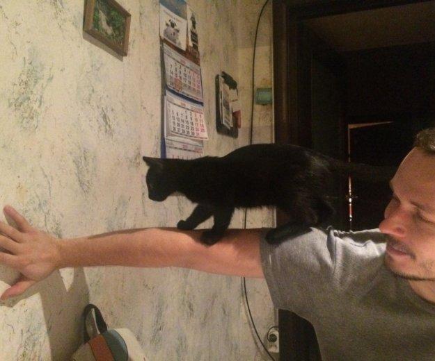 Маленький черный котенок ищет любящую семью.. Фото 3. Обнинск.
