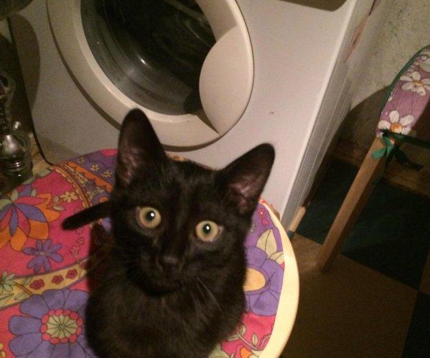 Маленький черный котенок ищет любящую семью.. Фото 2. Обнинск.