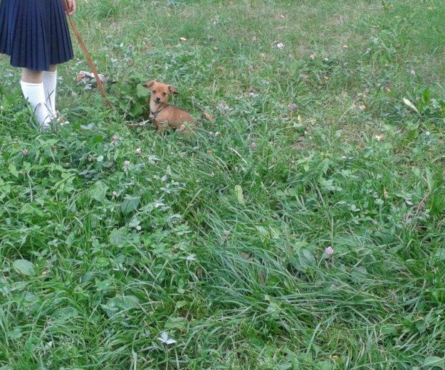 Собака. Фото 2. Курск.