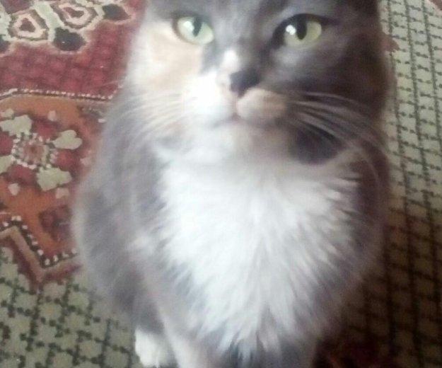 Отдам котят и кошек. Фото 3. Астрахань.