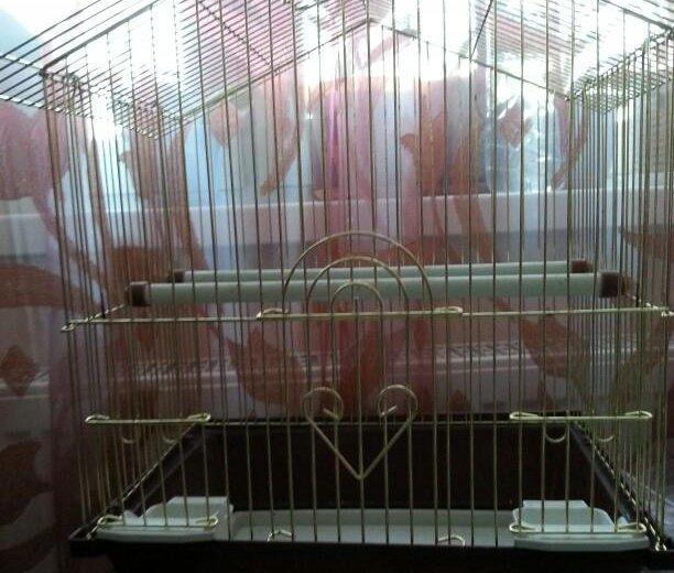 Клетка для птиц. Фото 2. Новый Уренгой.