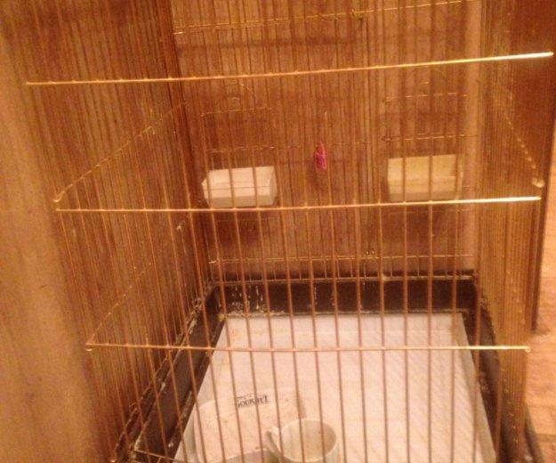 Клетка для крупных попугаев со всеми игрушками. Фото 1. Москва.