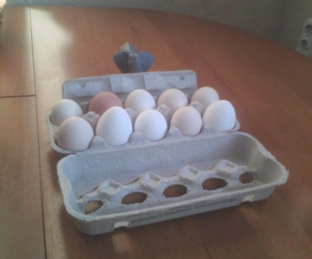 Яйца свойские натуральные. Фото 1. Фурманов.