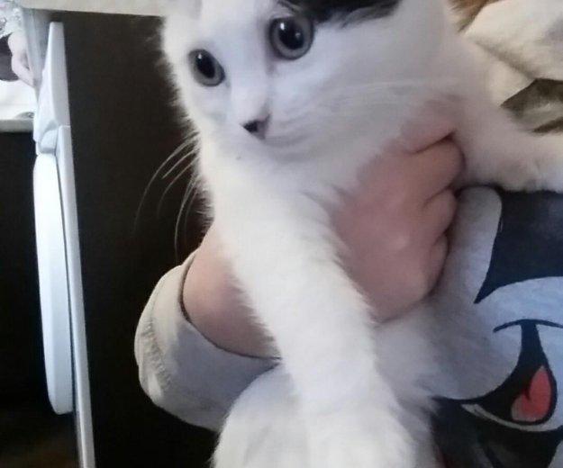 Кошечка. Фото 1. Динская.