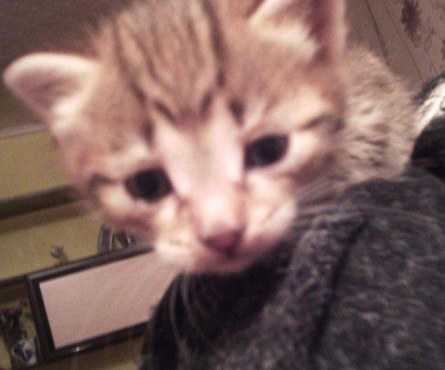 Котята. Фото 1. Барнаул.