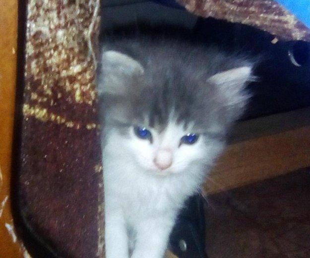 Котята бесплатно. Фото 1. Саратов.