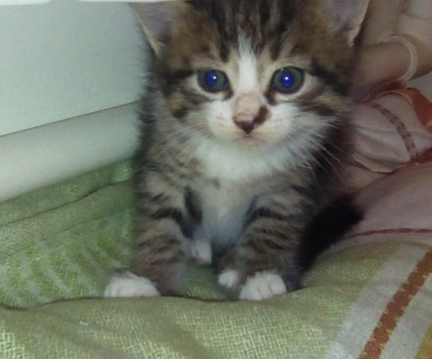 Котята бесплатно. Фото 3. Саратов.