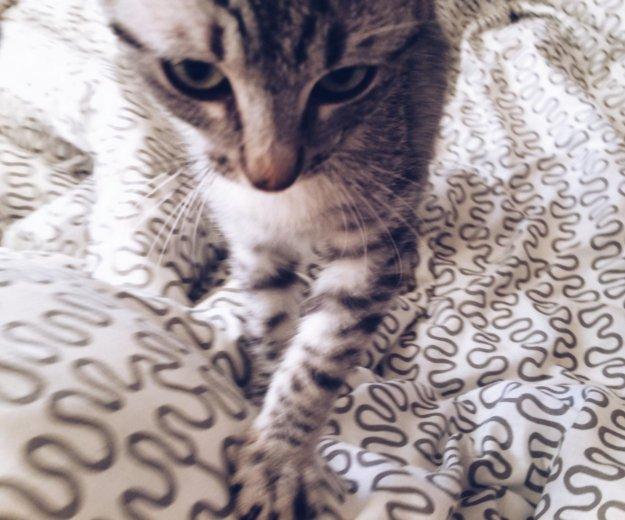 Котенок 2 месяца девочка. Фото 1. Москва.