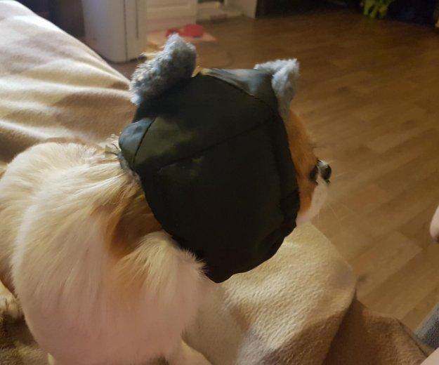 Одежда для собак ( шапка). Фото 1. Москва.