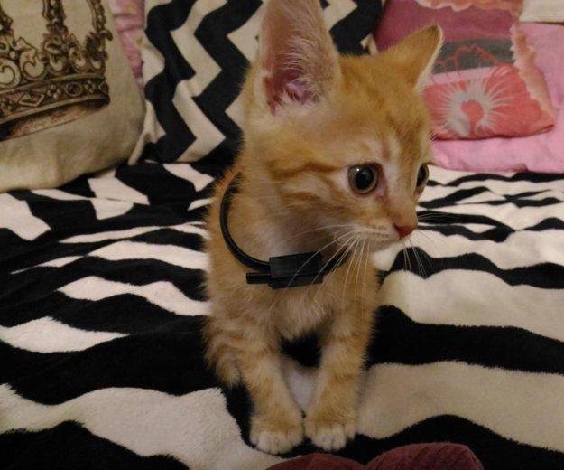 Отдадим котенка милого, пушистого). Фото 1. Ростов-на-Дону.