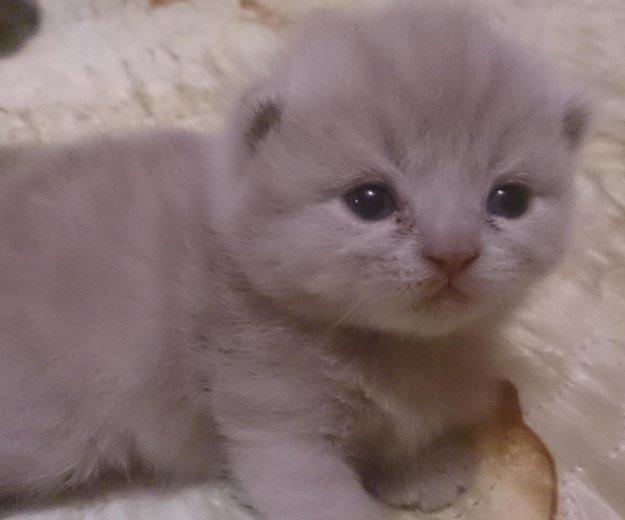 Плюшевые котятоньки. Фото 1. Муром.