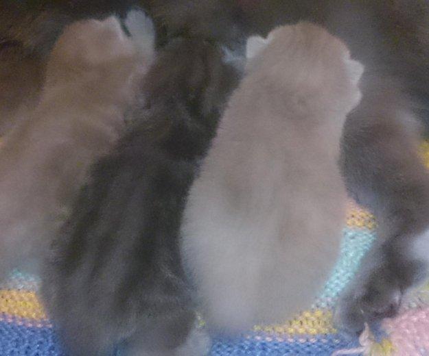 Плюшевые котятоньки. Фото 2. Муром.