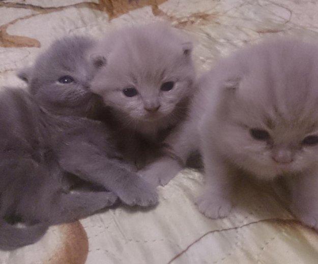 Плюшевые котятоньки. Фото 3. Муром.