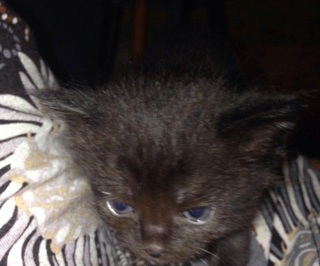 Котята в добрые руки. Фото 3. Подольск.