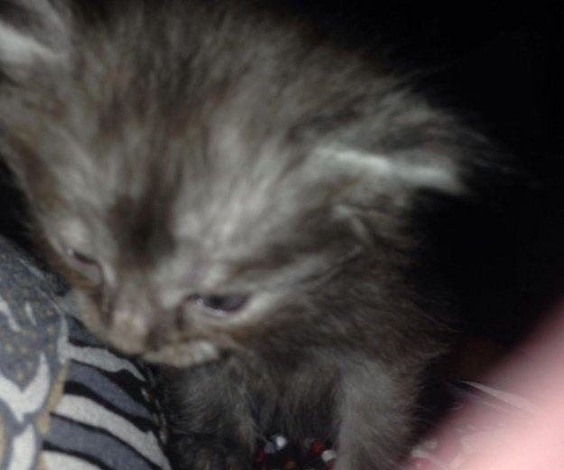 Котята в добрые руки. Фото 4. Подольск.