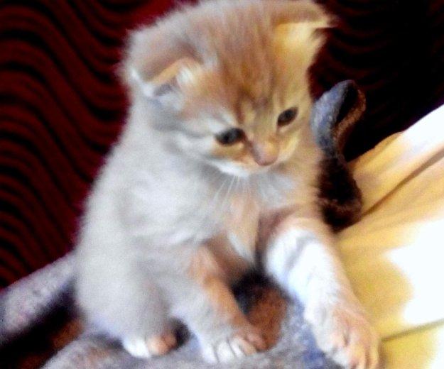 Котята. Фото 2. Мостовской.