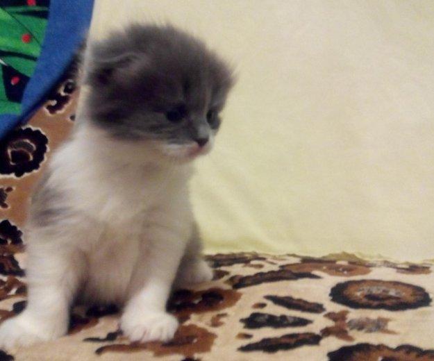 Котята. Фото 3. Мостовской.