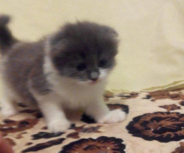 Котята. Фото 4. Мостовской.